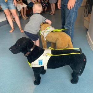 cute little boy wanting to take one of the guide dog soft toys home with him