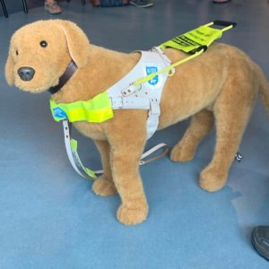 toy guide dog demonstrates wearing a guide dog harness
